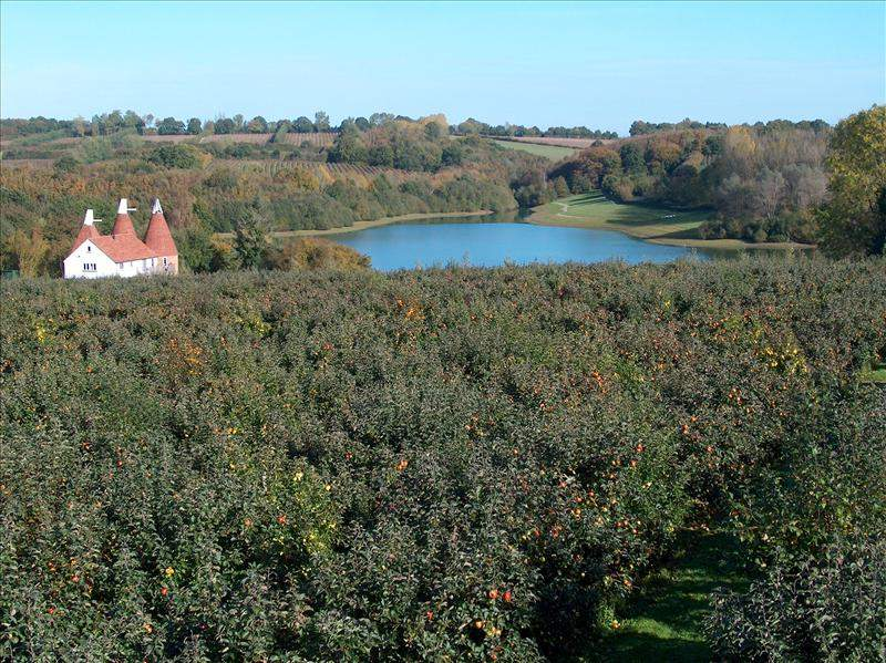 Orchards overlooking Bewl Water